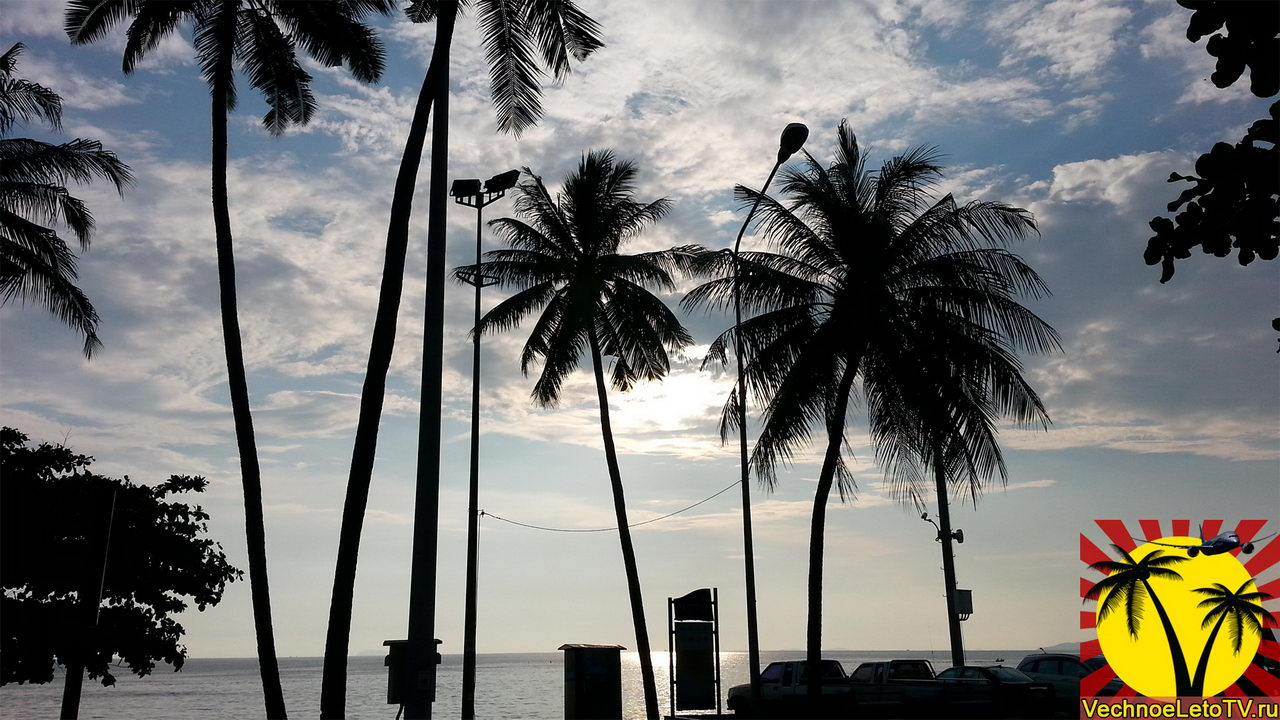Пальмы в Паттайе