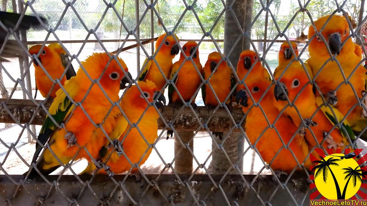 Попугаи-на-ферме