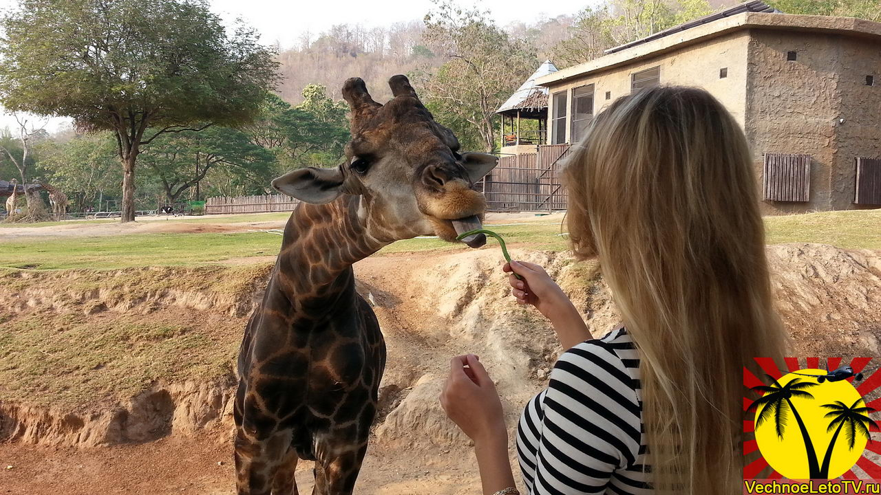 Зоопарк-в-Тайланде