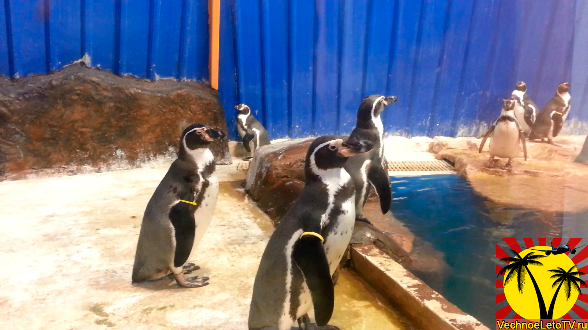 Пингвины-в-зоопарке