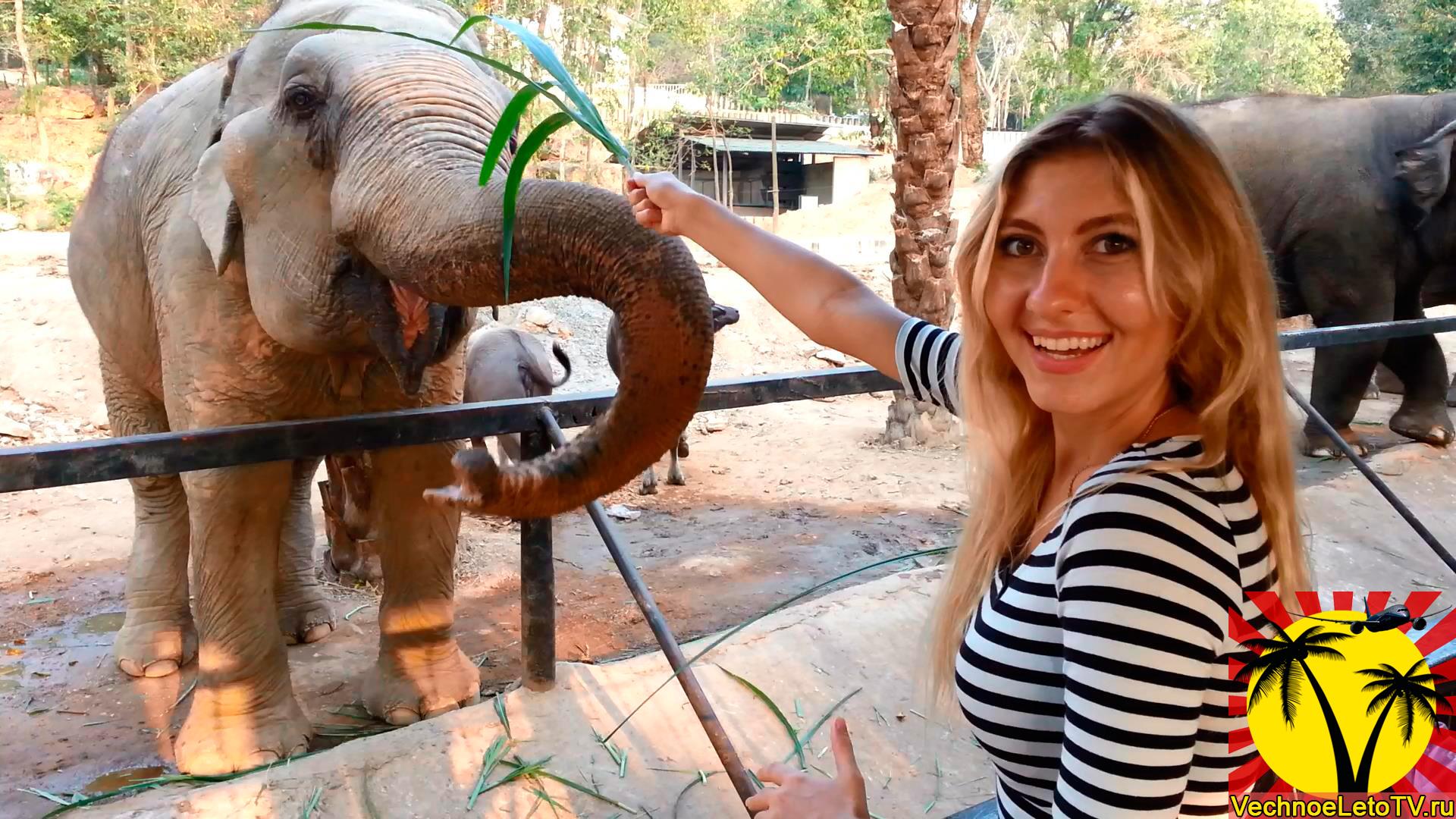 Слон-в-Тайланде