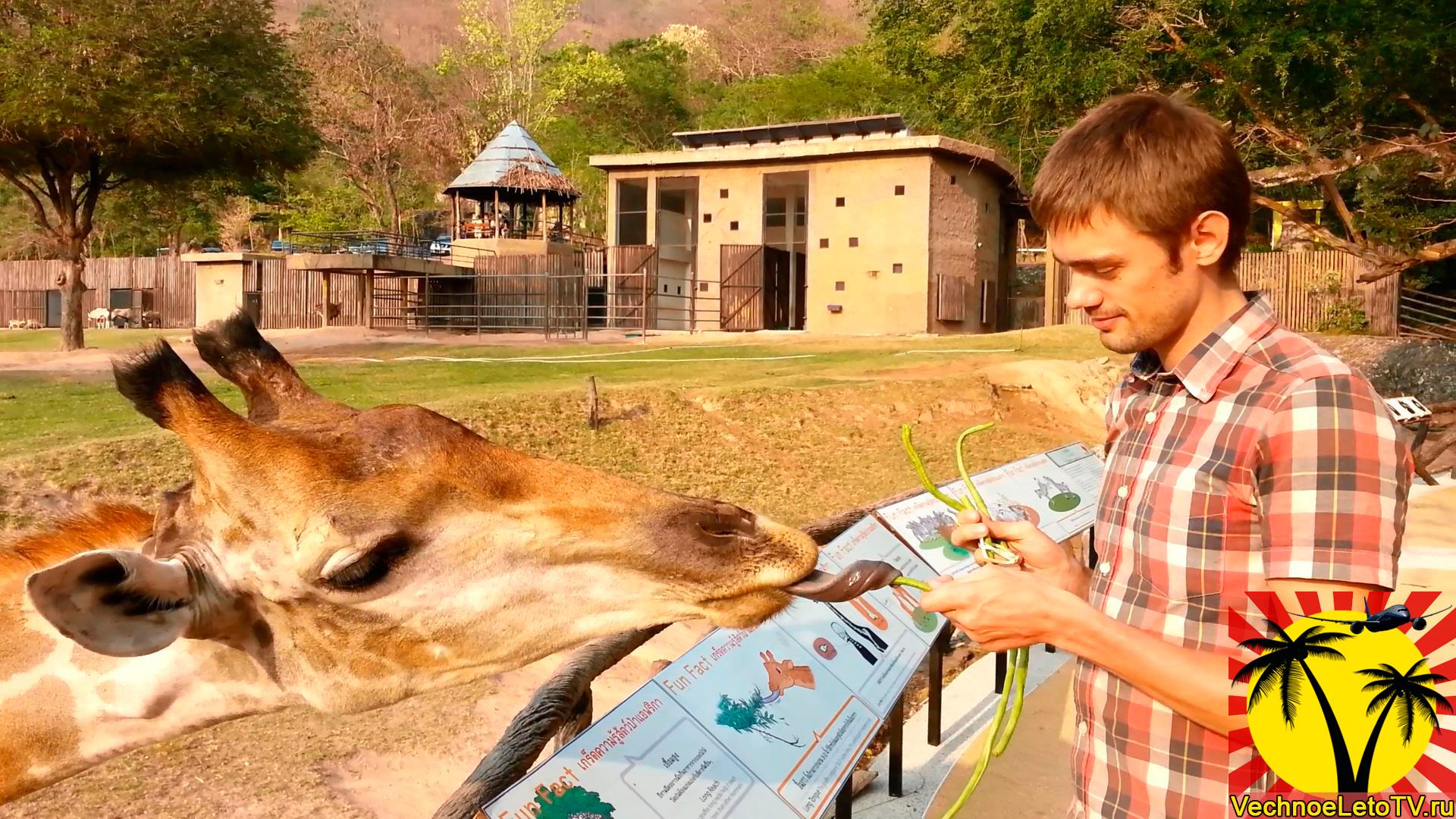 Жираф-в-зоопарке-Кхао-Кхео-Паттайя