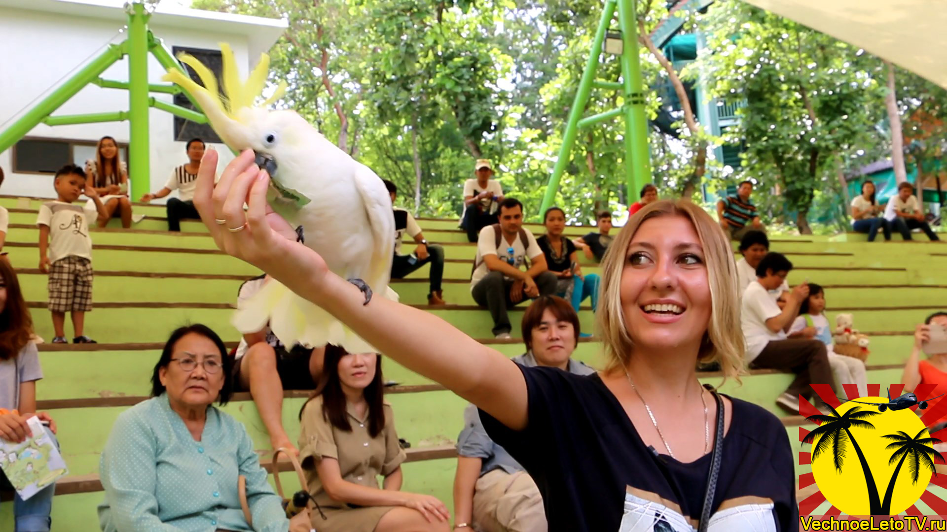 Попугай-дрессерованный
