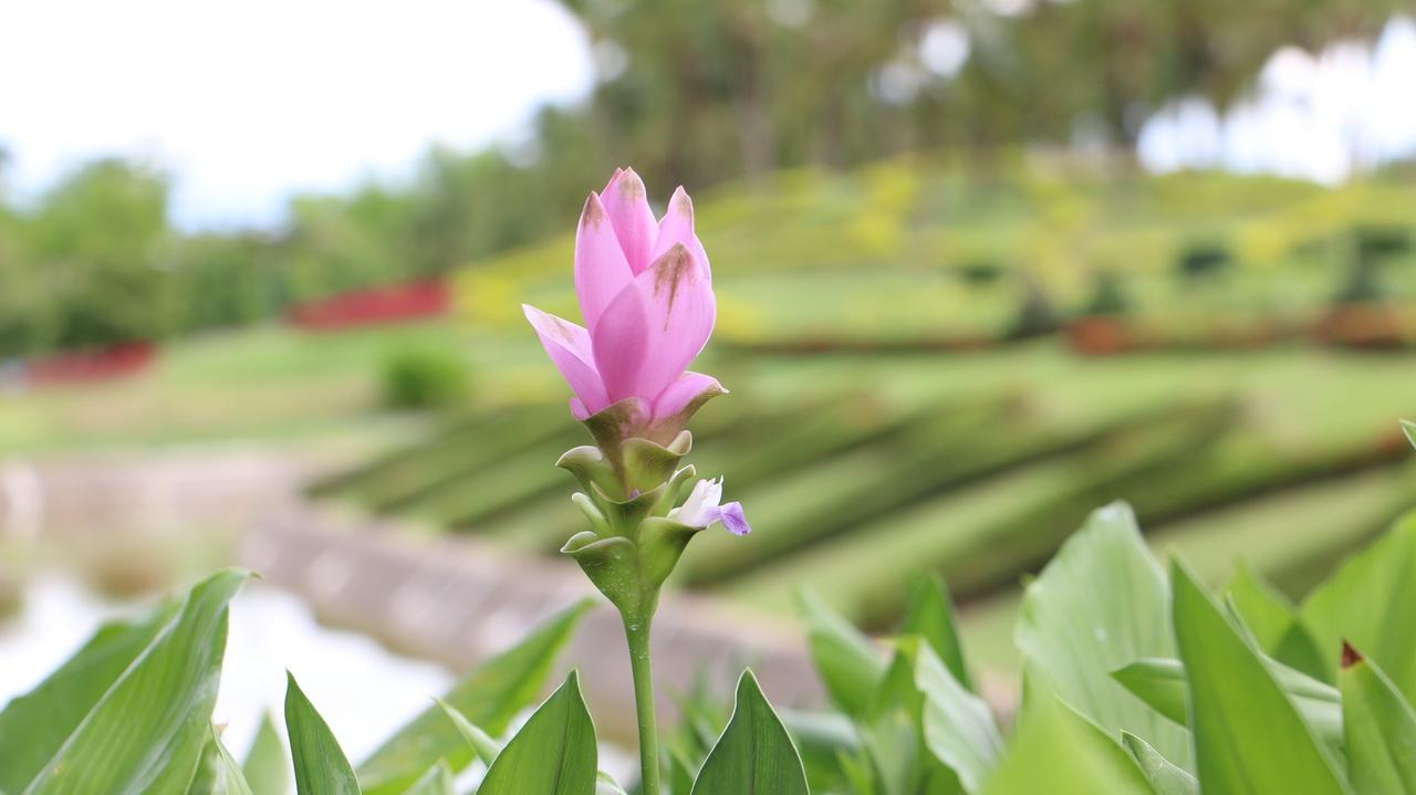 Royal-Flora-Park-Rajapruek-Chiangai2