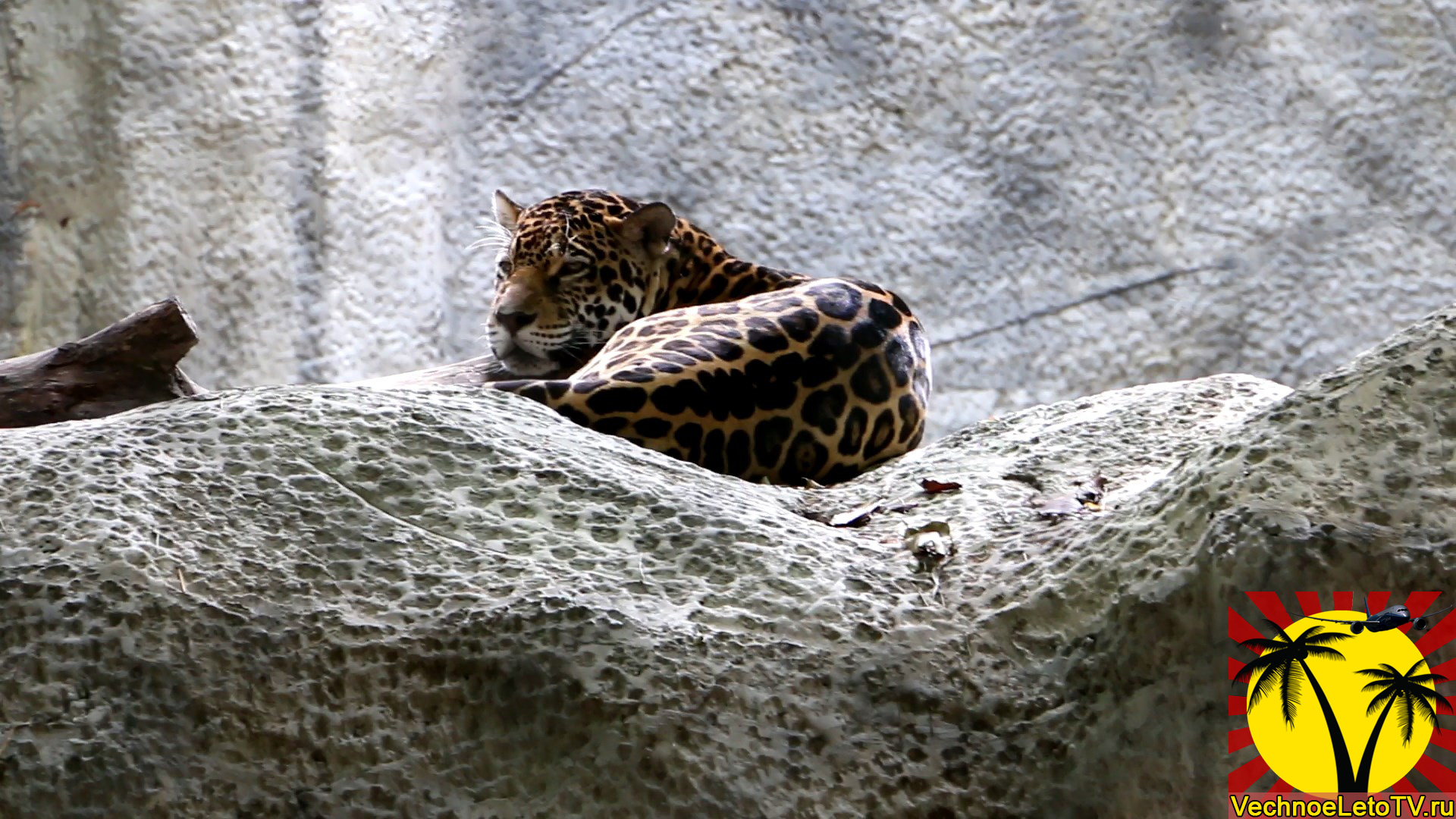Зоопарк-в-Тайланде-Чиангмай