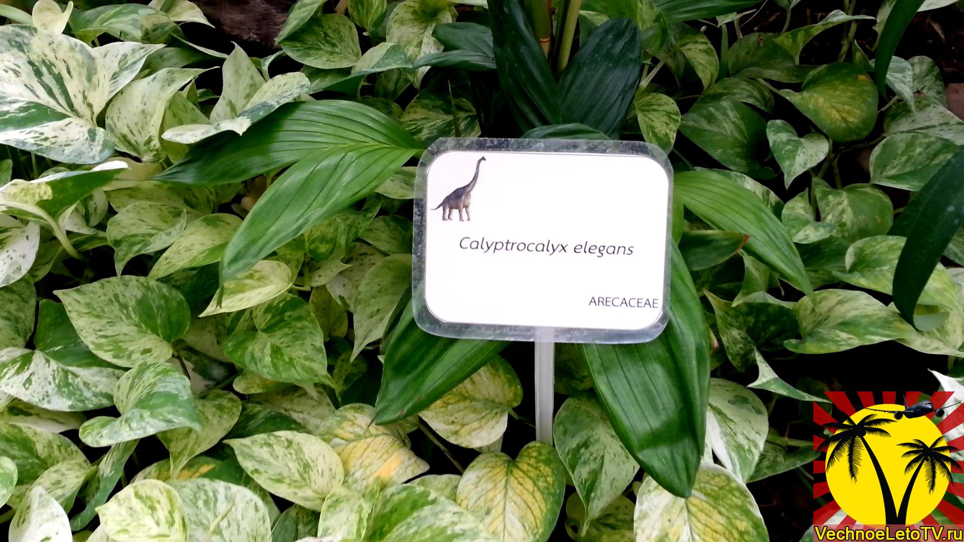 доисторияческие-растения