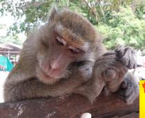 Отмена тайской двукратной туристической визы – Что делать дальше?