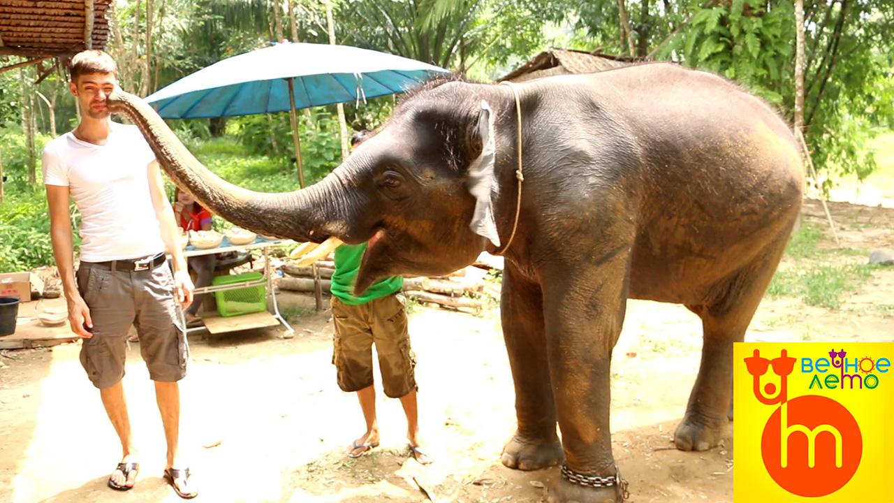 Шоу-слонов