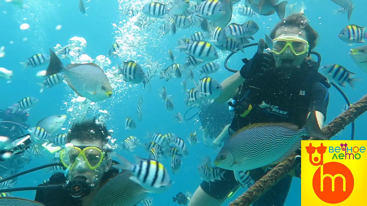 Дайвинг-морские-рыбки
