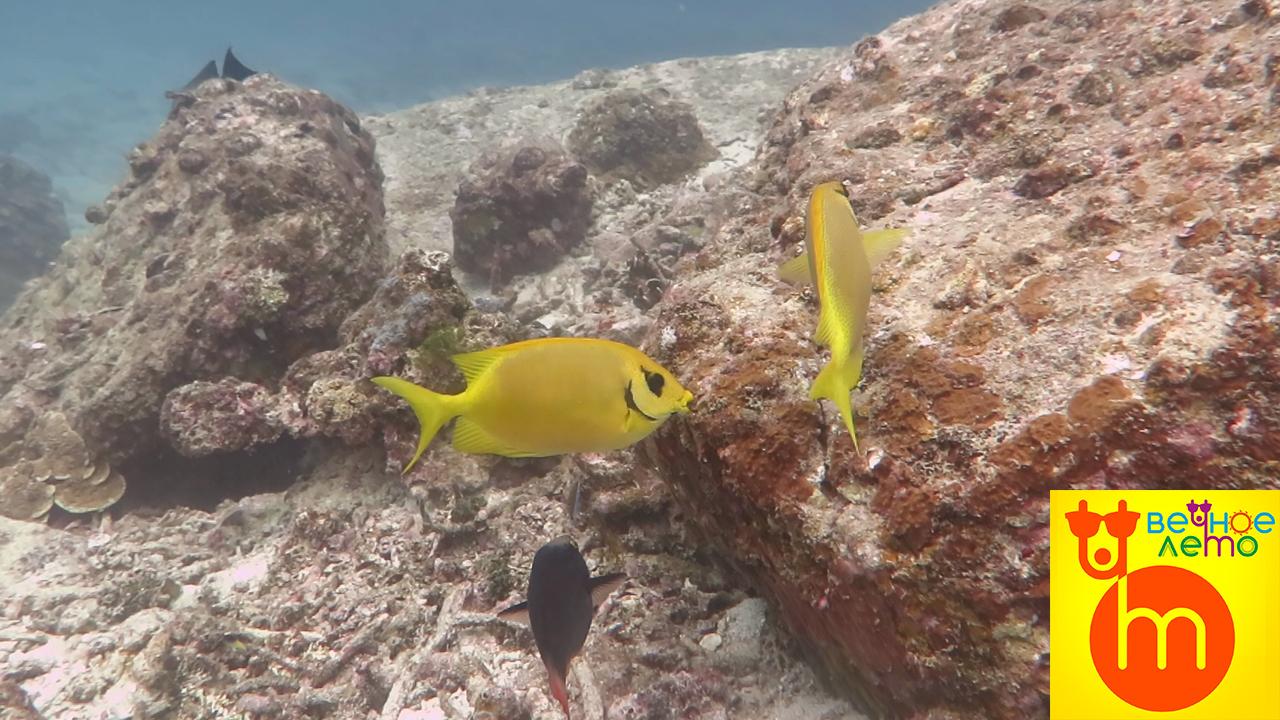 Морские-рыбки
