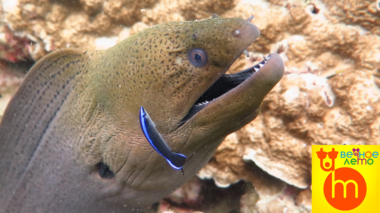 Мурена-дайвинг-подводный-мир