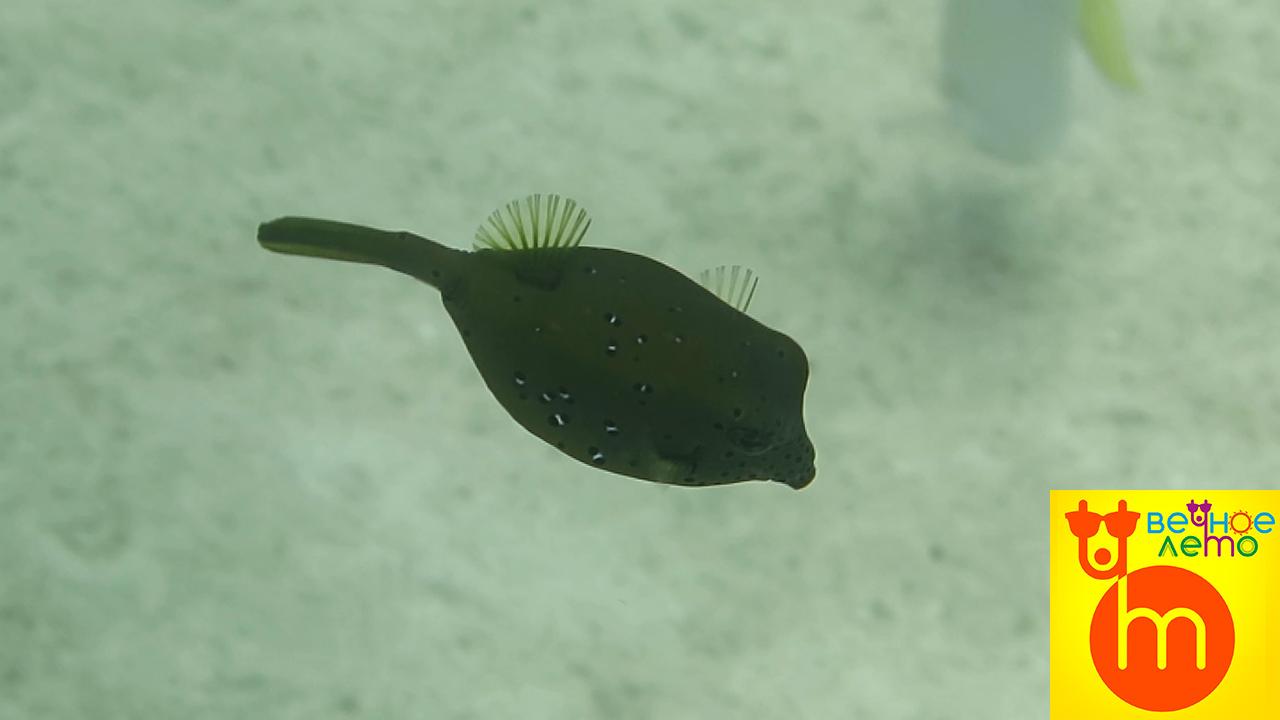 Рыбки-на-Пхукете