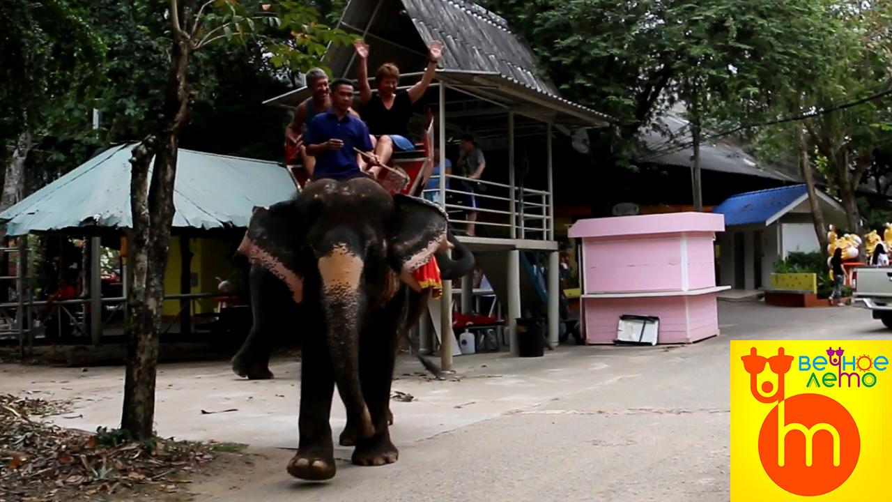 Катание-на-слонах