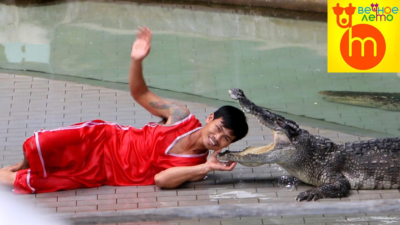 Шоу-крокодилов