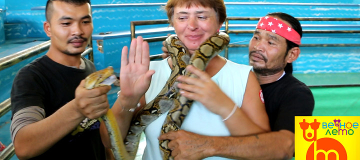 Шоу змей в Паттайе — Стоит ли идти?