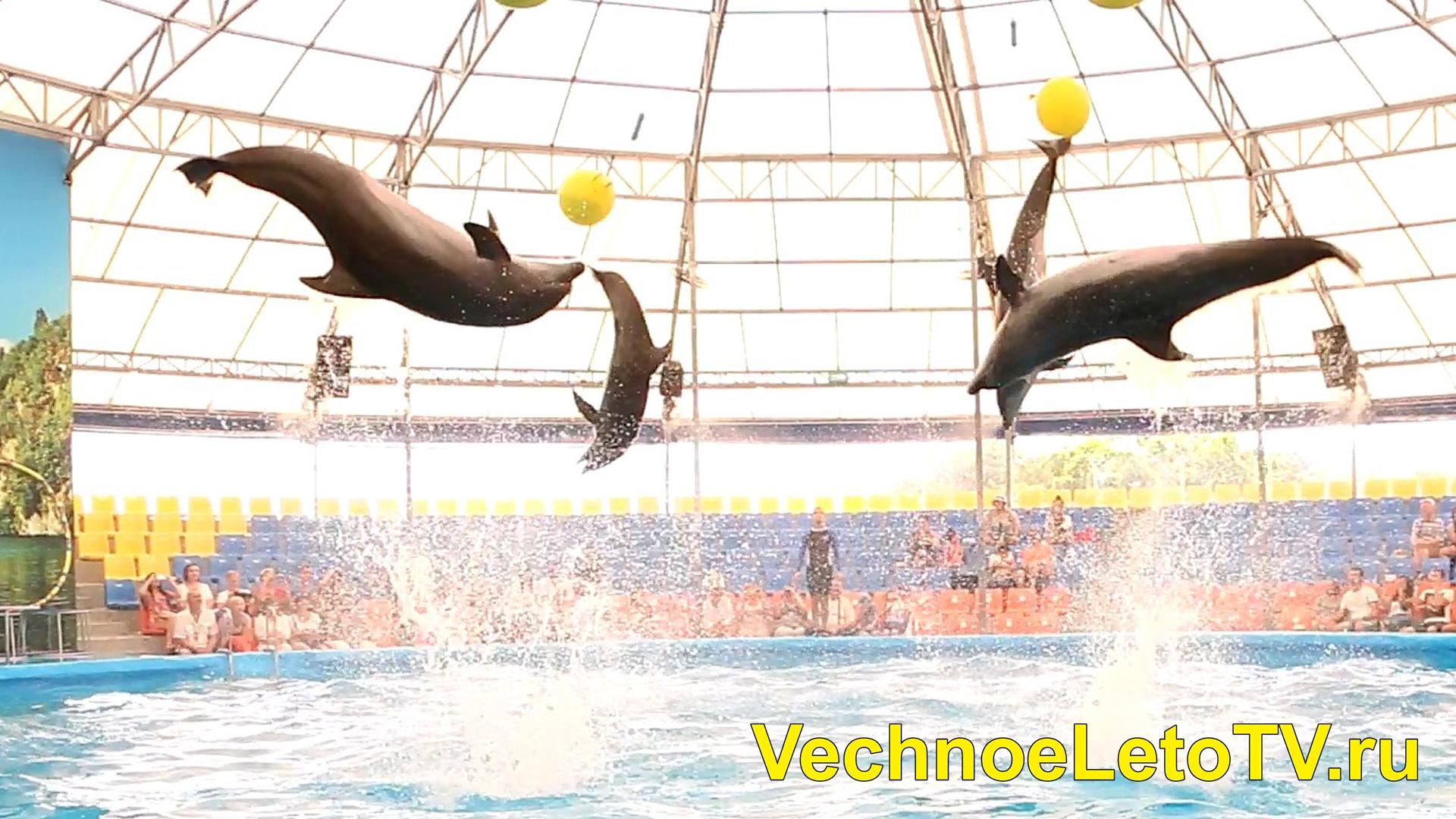 Дельфинарий Немо Пхукет