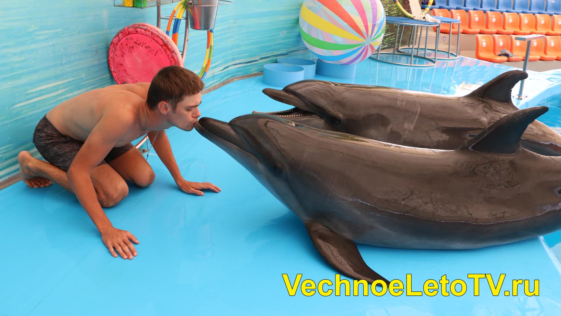 Дельфинарий Пхукет цены