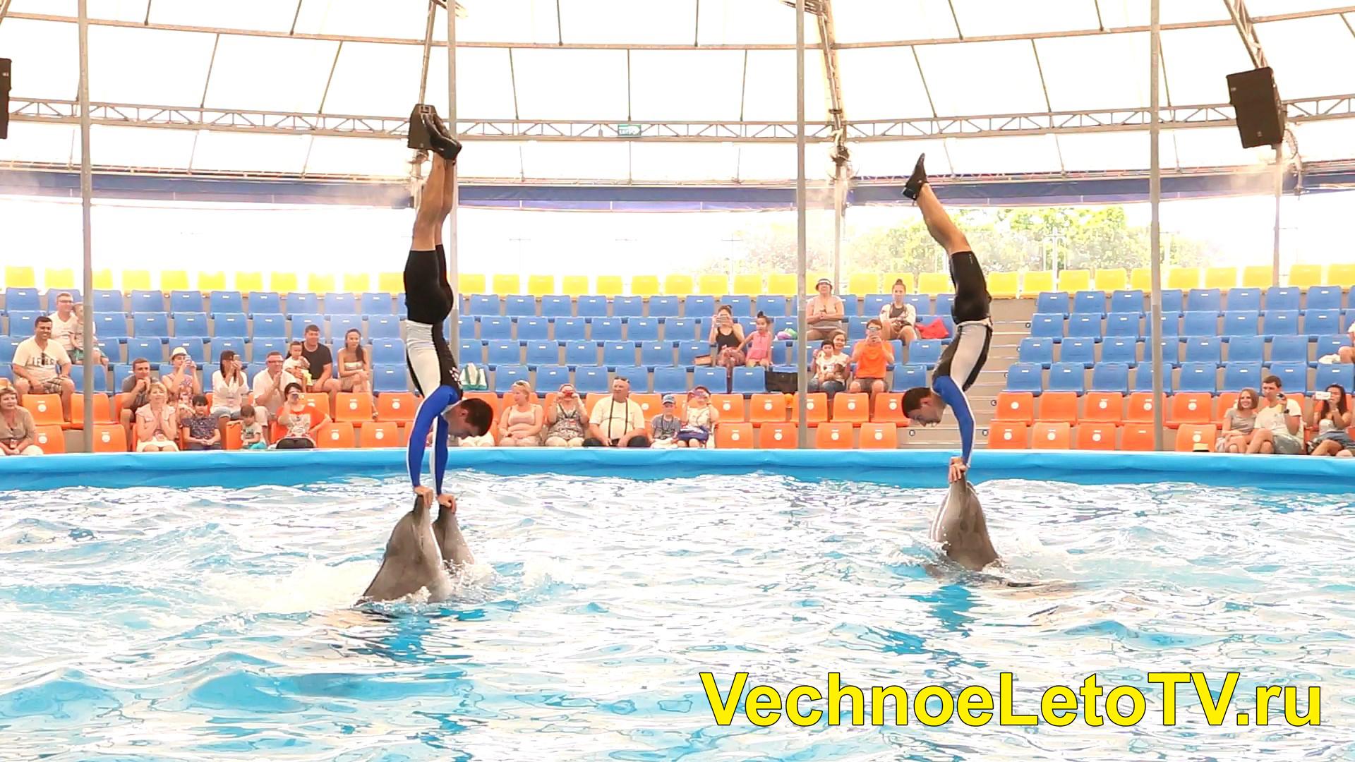 Дельфины Пхукет