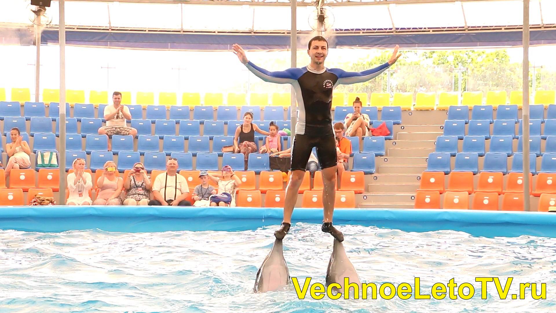 Пхукет дельфинарий Nemo