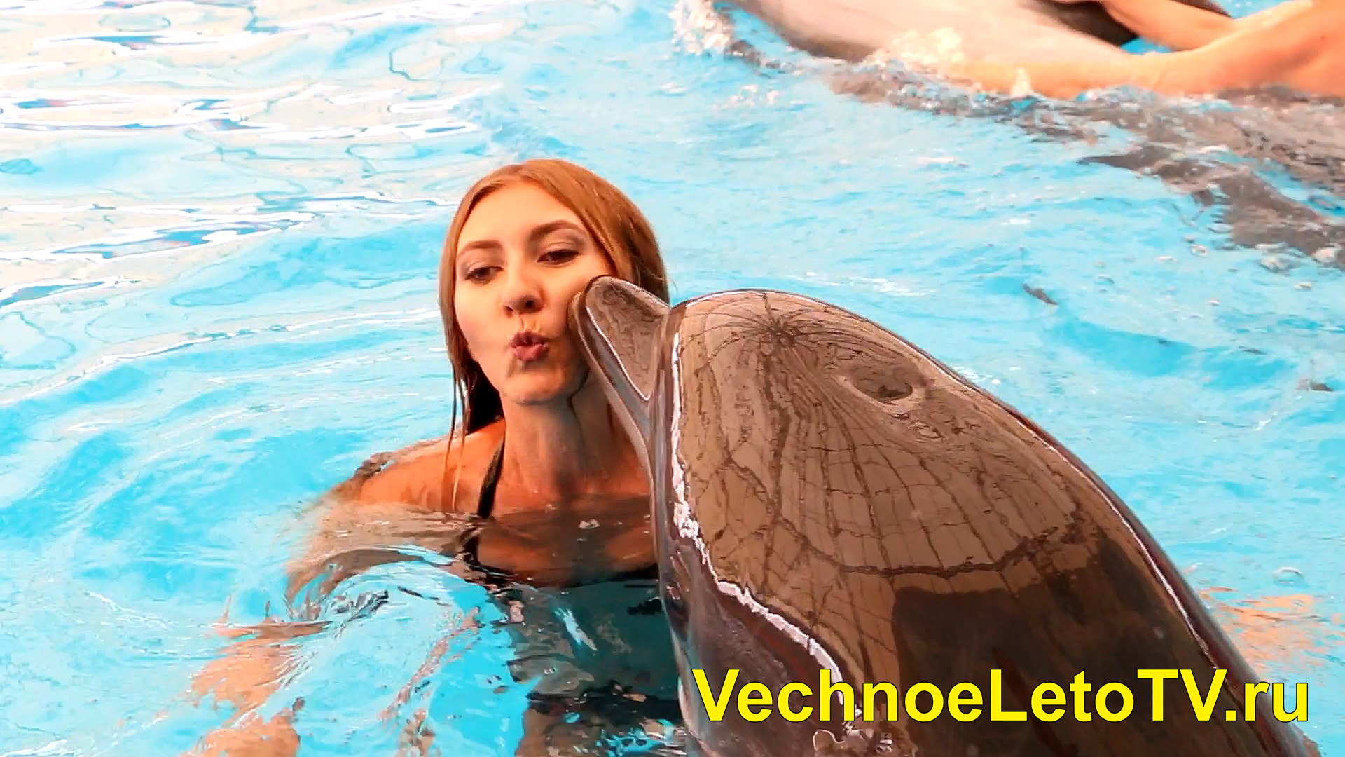 Плавание с дельфинами Пхукет