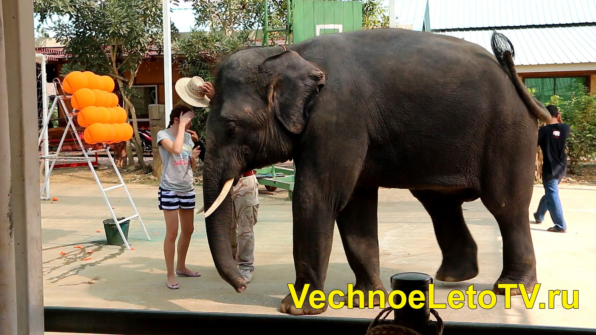 Шоу слонов Квай