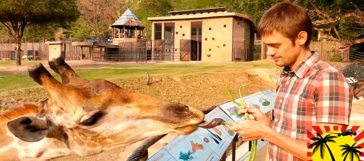 Зоопарк Кхао-Кхео в Паттайе — Санаторий для зверей