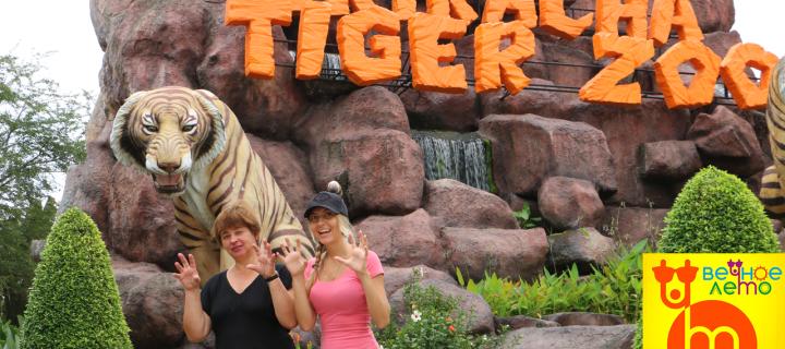 Тигровый зоопарк в Паттайе — отзыв об экскурсии