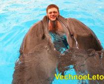 Дельфинарий на Пхукете – плавание с дельфинами